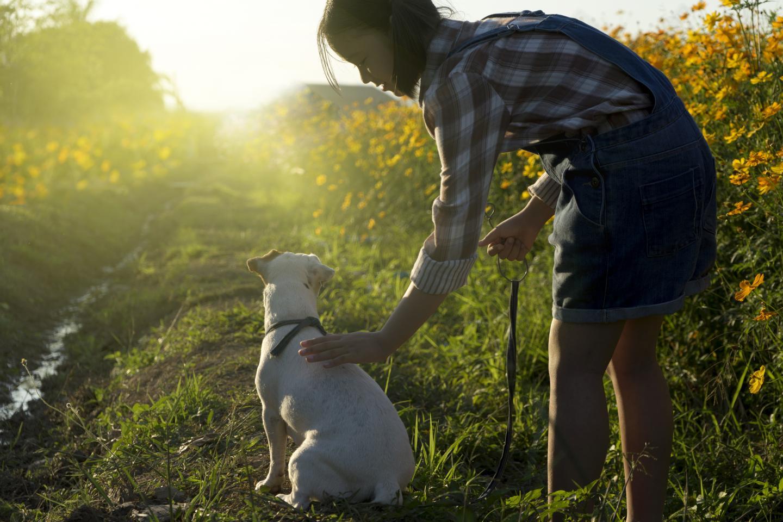 Animal Health Innovation Europe   Kisaco Research